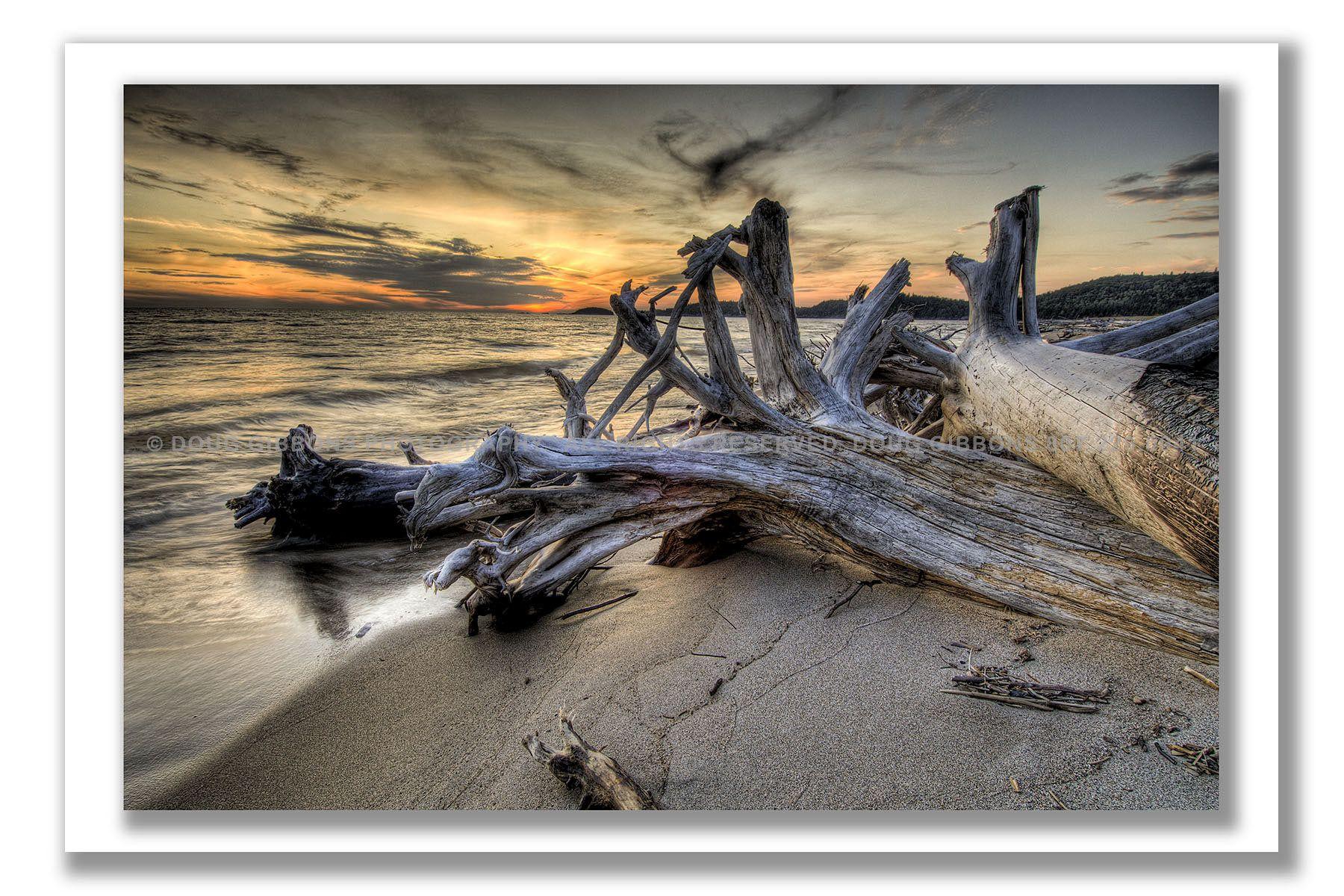 Pic Driftwood