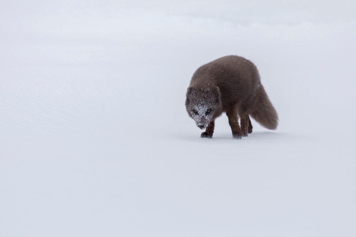 FOXES-3.jpg