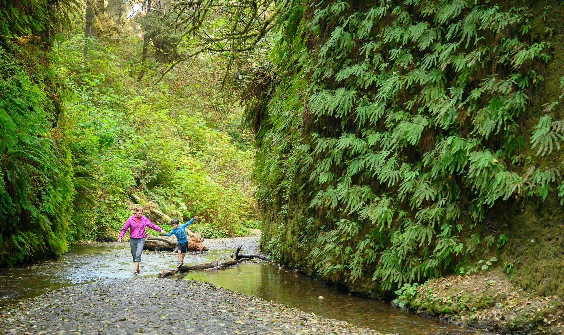 Fern Canyon, Redwood State and National Park