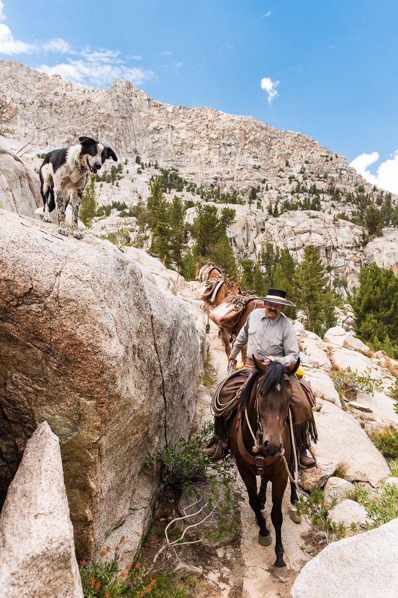 Horse Packer leads Packtrain