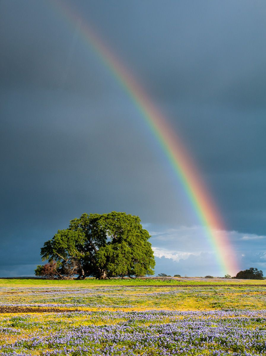 Rainbow over a Field of Wildflowers