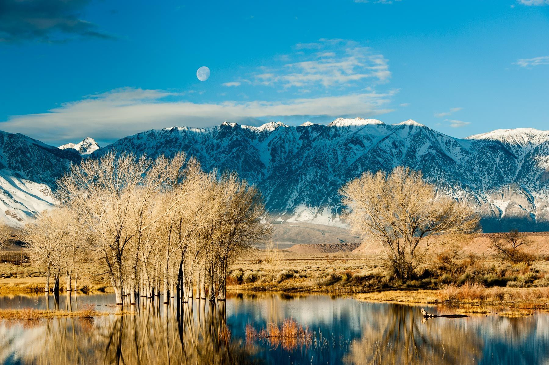Early Morning Winter Light and Setting Moon over an Eastern Sierra Pond
