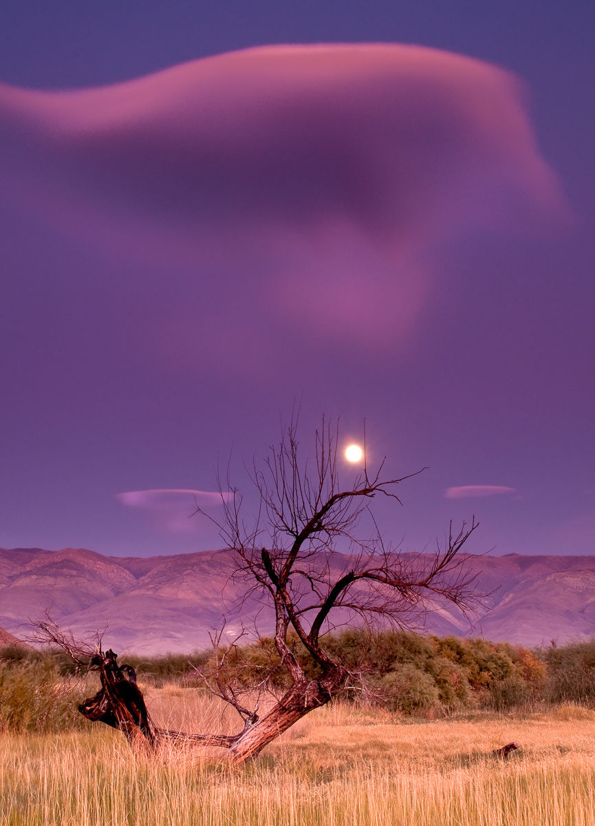 Tree in front of a Full Moon Rising over the White Mountains in Eastern Sierra