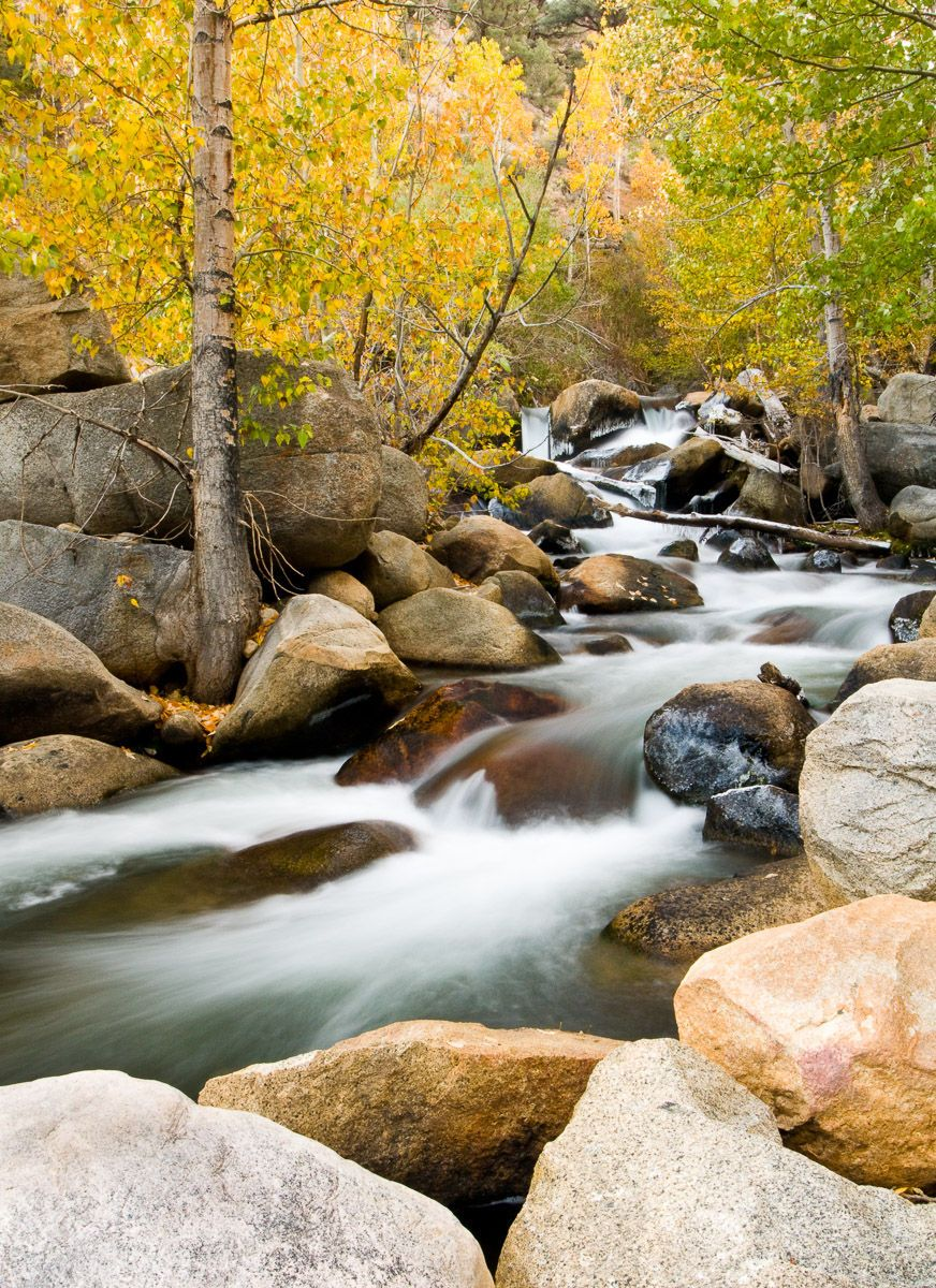Fall Aspen and flowing water along Bishop Creek