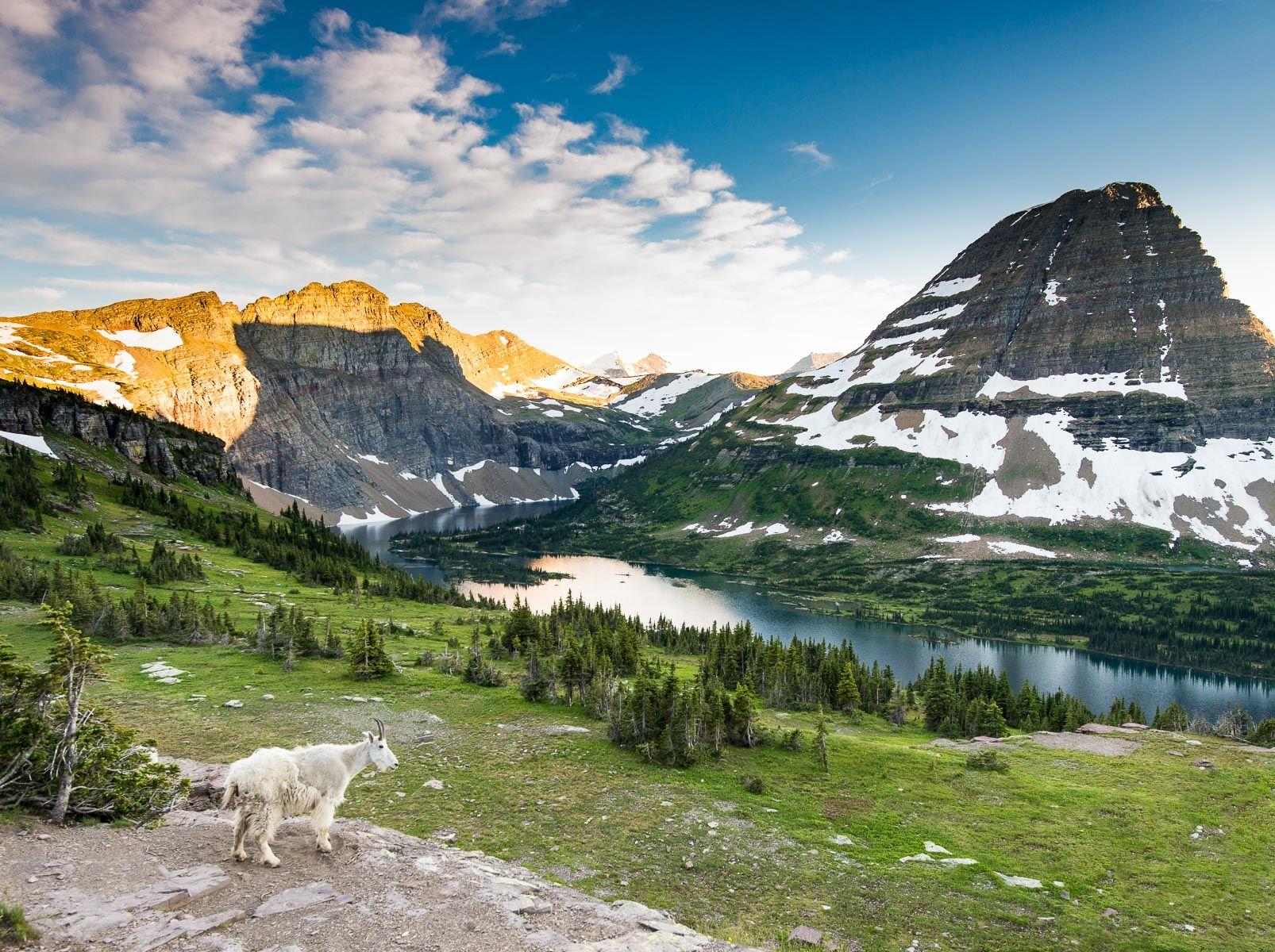 Mountain Goat and Hidden Lake