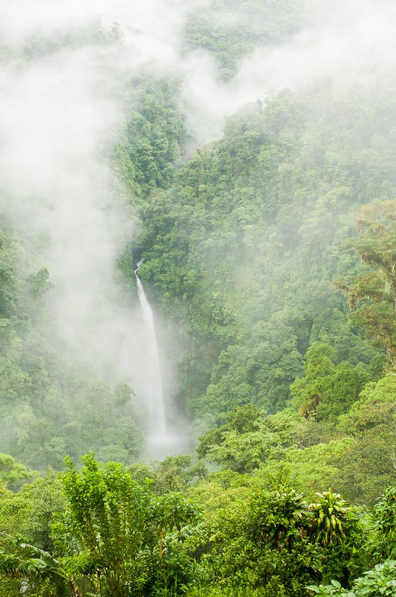 Waterfall in a Misty Cloud Forest
