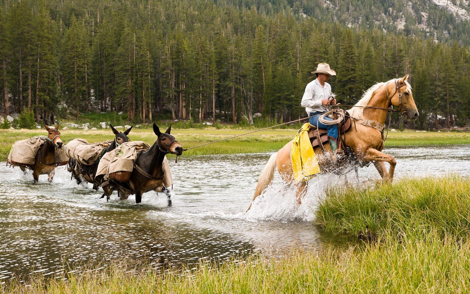 Horse Packer Leads a Pack Train across Evolution Creek