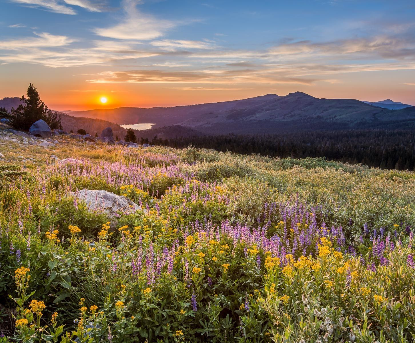 Spring Flowers at Sunset
