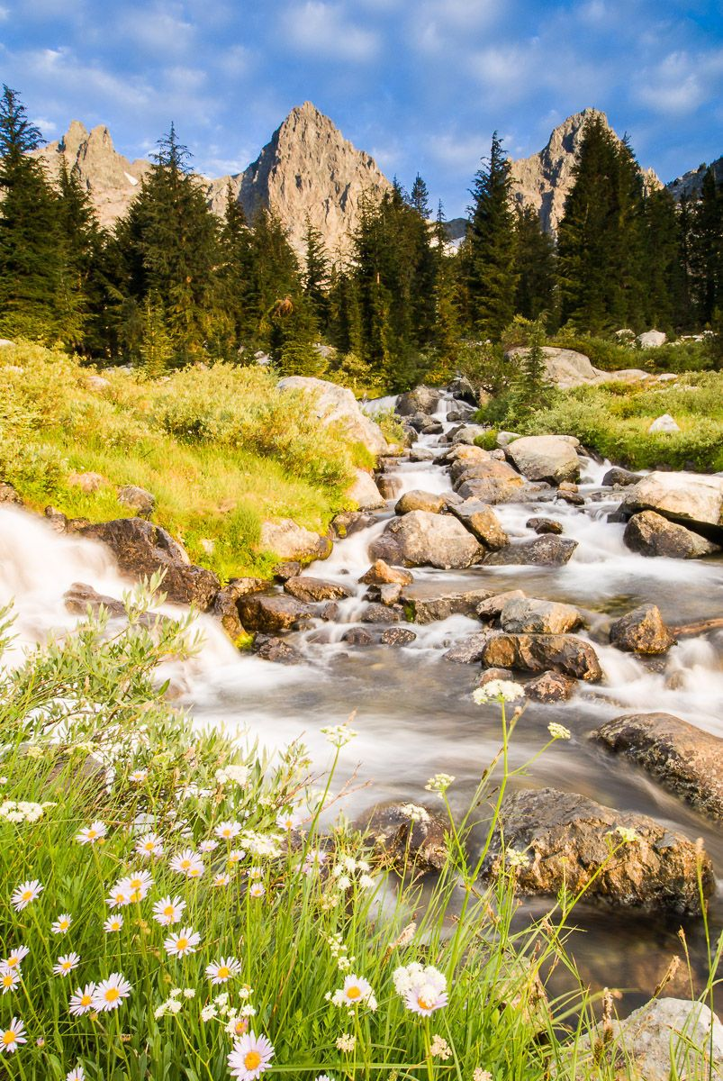 Spring Flowers along the Flowing Water below Mount Ritter and Banner Mountain