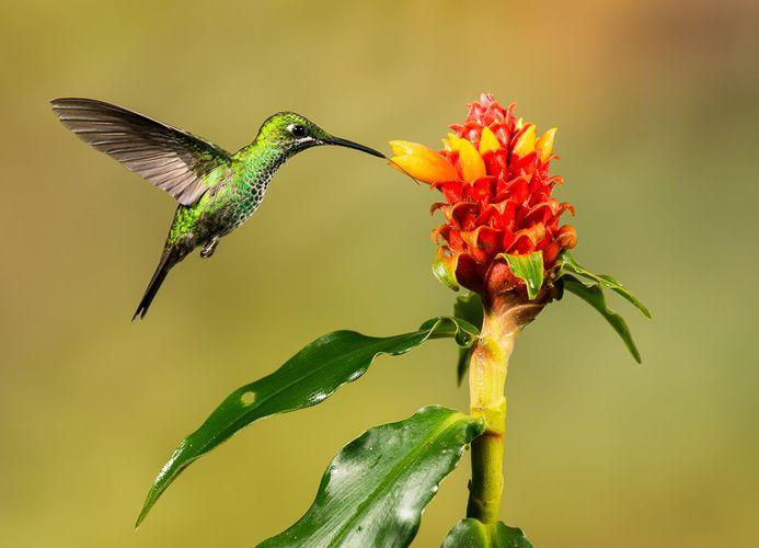 Josh Miller Costa Rica-2.jpg