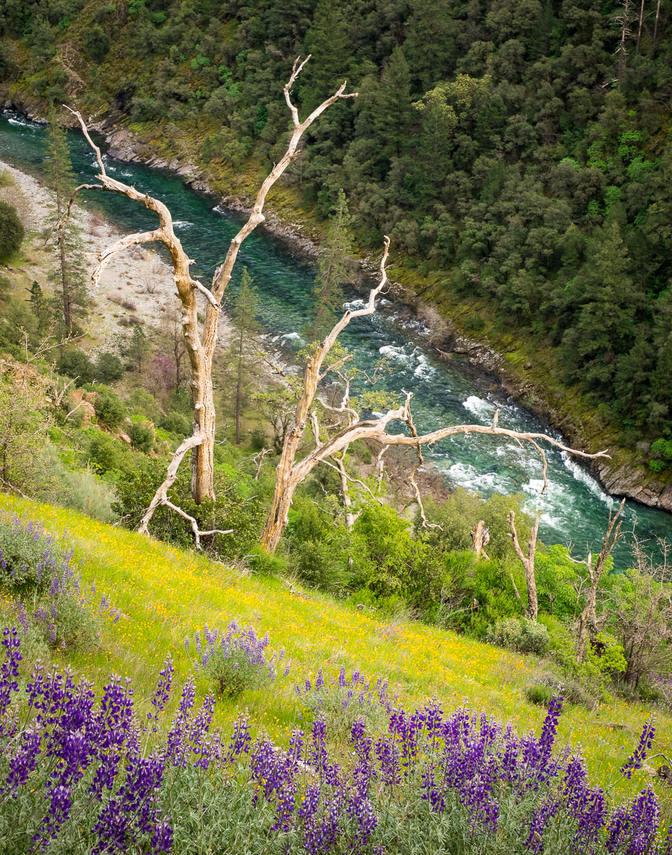 Spring flowers in American River Canyon