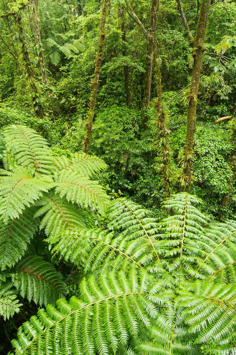 Ranforest Fern Landscape