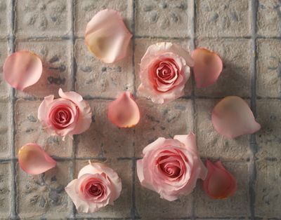 Vinnie-Flowers2.jpg
