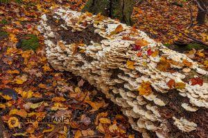 Oyster-Mushrooms_006-468.jpg