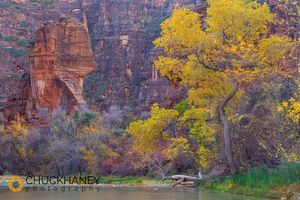 Zion_virgin_autumn_009_copy.jpg