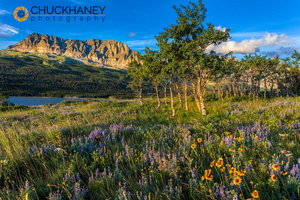 Many_glacier_wildflowers_020_398.jpg