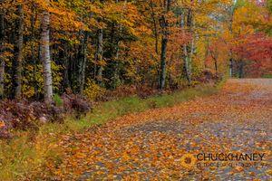 Leafy-Road-405.jpg