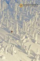 Snowghost-ski-143.jpg