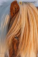 Icelandic-Horses_010-413.jpg