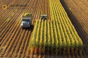 Corn Silage Cutting