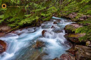 Avalanche-Creek_024-482.jpg