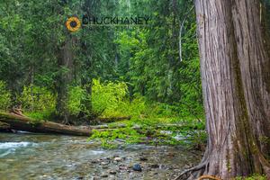 Ross Creek Cedars Scenic Area