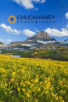 Glacier_lilly_logan_pass_005_copy.jpg