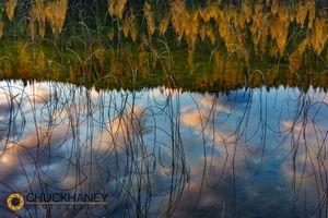 Spencer-Lk-Reflect_006-487.jpg