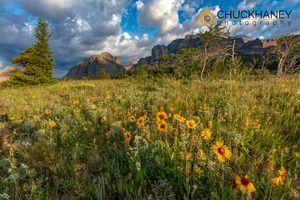 Many-Glacier-Wildflowers_072-482.jpg