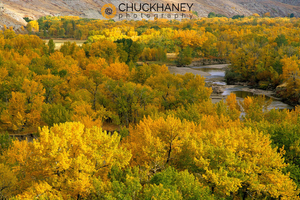 Autumn color on the Two Medicine river