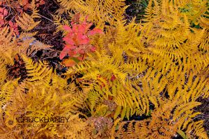 Autumn-Fern_011-466.jpg