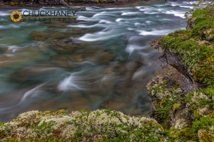 McDonald-Creek-Moss_026-copy.jpg