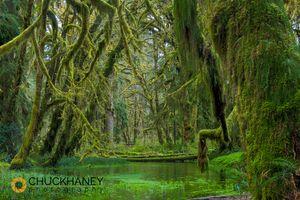 Quinault-Rainforest_009-copy.jpg
