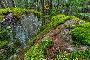 Glacier Moss