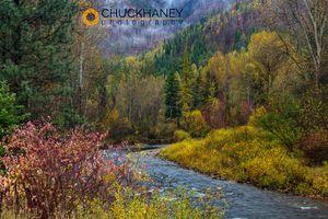 Lolo-Creek-Autumn_006-499.jpg