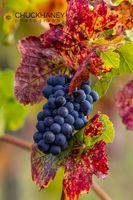 Pinot-Noir_006-513.jpg