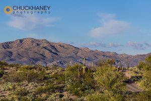 Saguaro Road bike