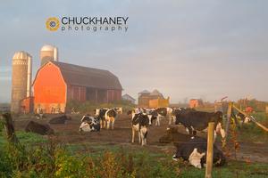 Wisconsin Dairy