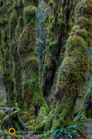 Olympic-National-Park_085-copy.jpg