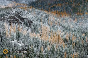 Columbia-Mtn-Snow_004-487.jpg
