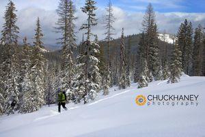 Ski touring @ Lolo Pass