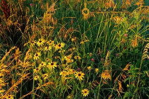 Neil Smith NWR Wildflowers