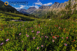 Logan_pass_wildflowers_008_copy.jpg