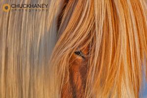 Icelandic-Horses_011-413.jpg