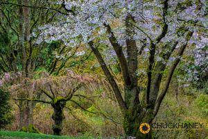Seattle-Arboretum_048-451.jpg