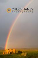 Judith Rainbow