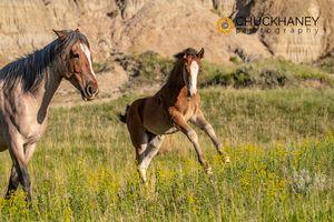 TR-Wild-Horses_002-copy.jpg