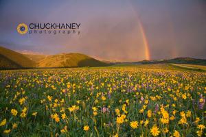 Bighorn Wildflowers