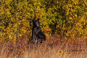 Black-Bear_046-437.jpg