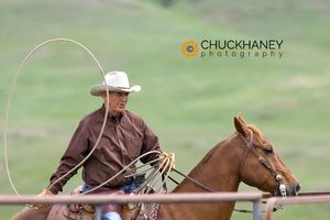 Cattle Branding @ Hughes Ranch